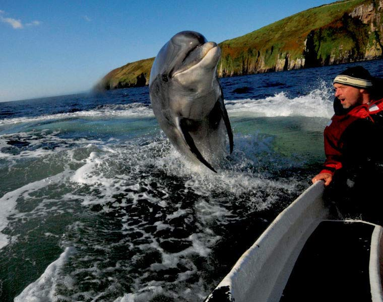 Dolphin spotting in Dingle